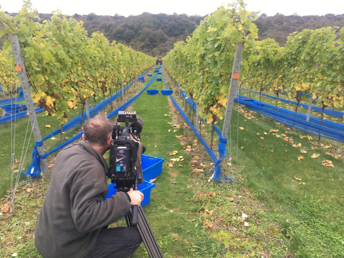BBC filming 2017 Rathfinny harvest