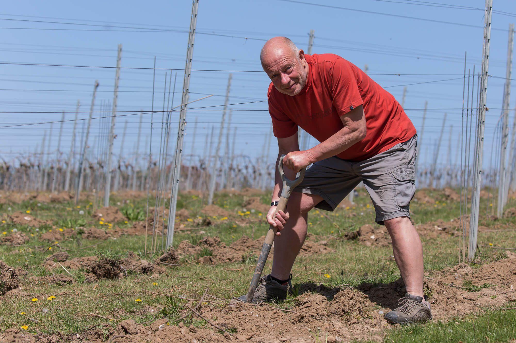 David on the Vineyard