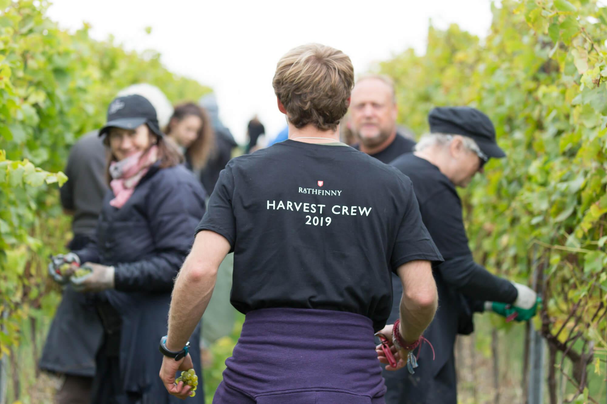Man walking through vines