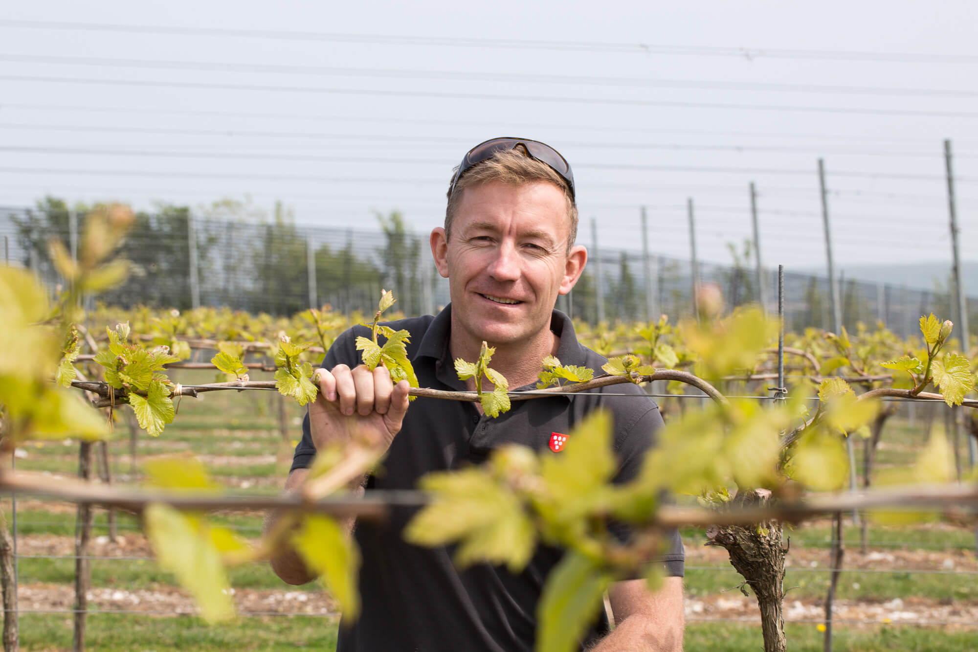Vineyard Manager Kneeling by a vine bursting with new buds