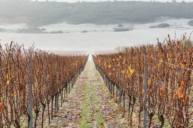 December Vines