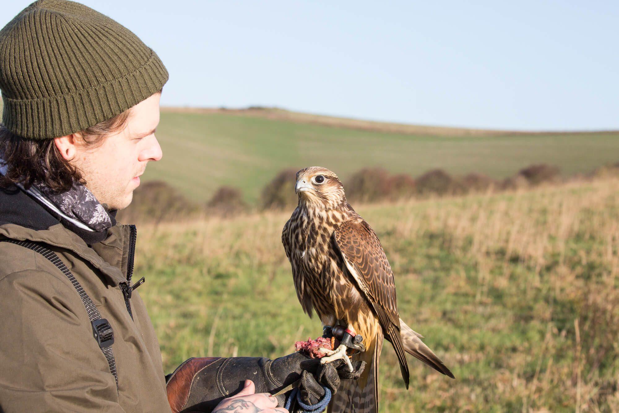 Eliot Holding a Falcon
