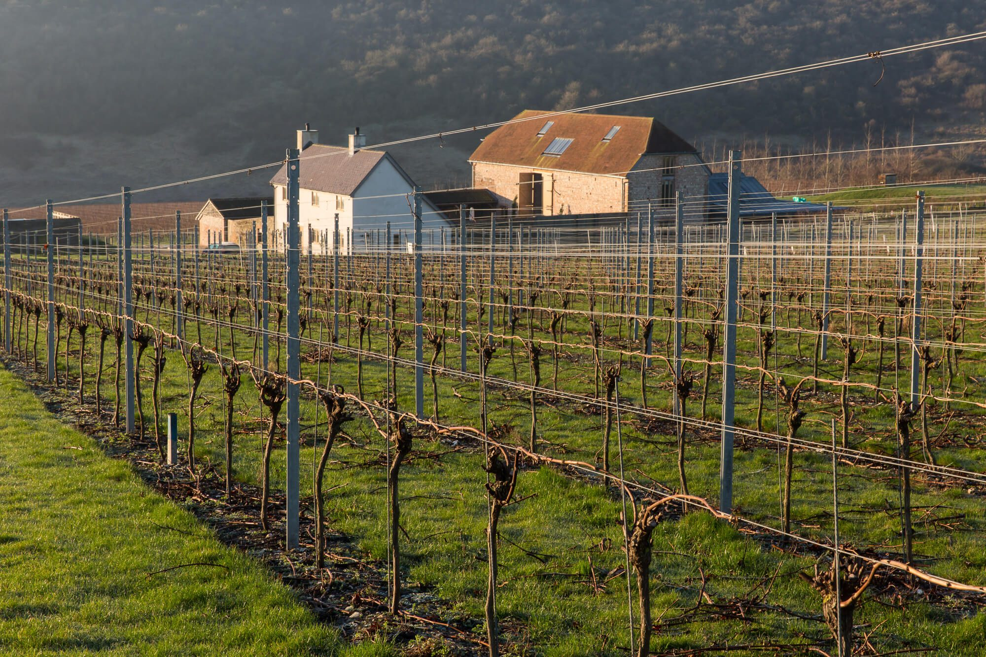 Flint Barns and Pruned Vines