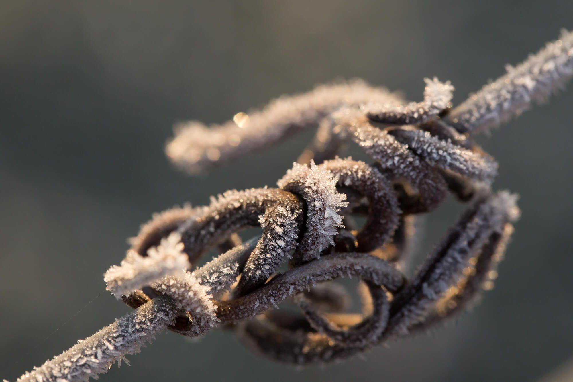 Frozen Vine