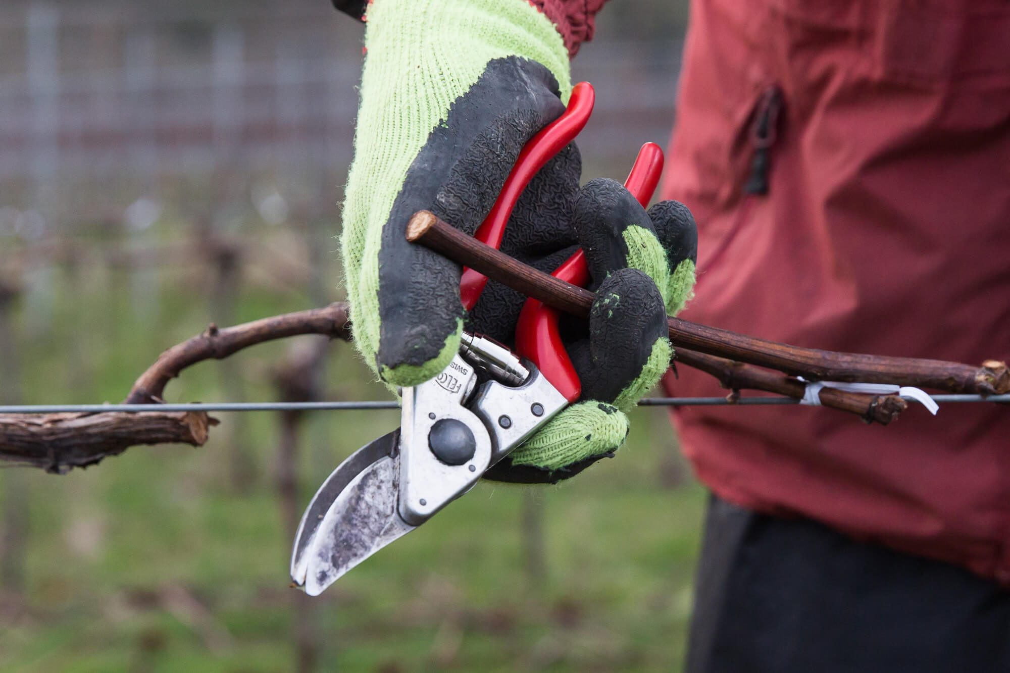 Hand Pruning