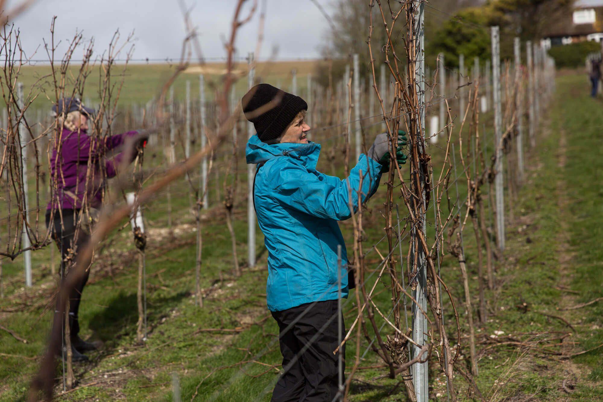 Julie Kells Pruning