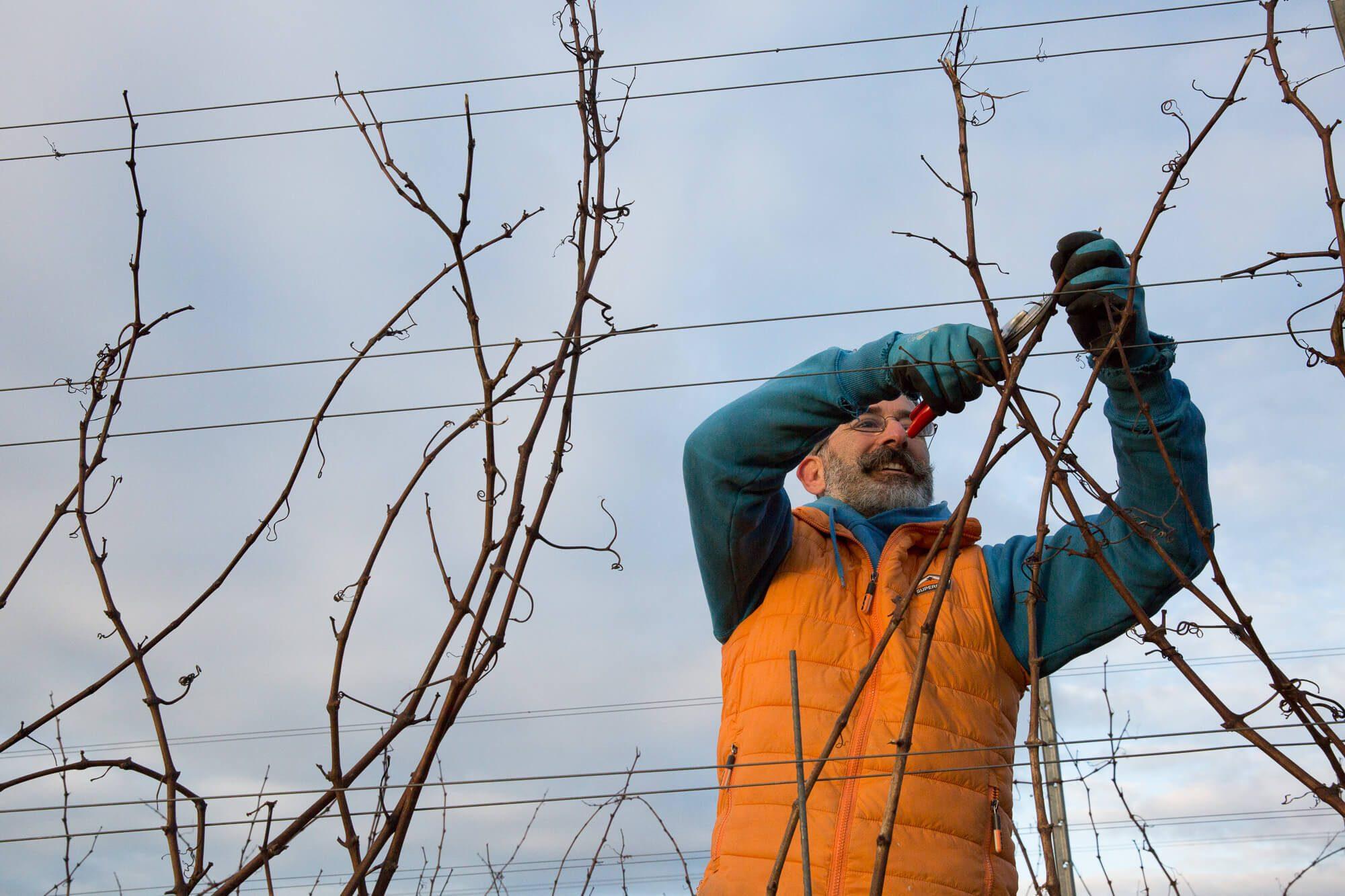 Man Pruning