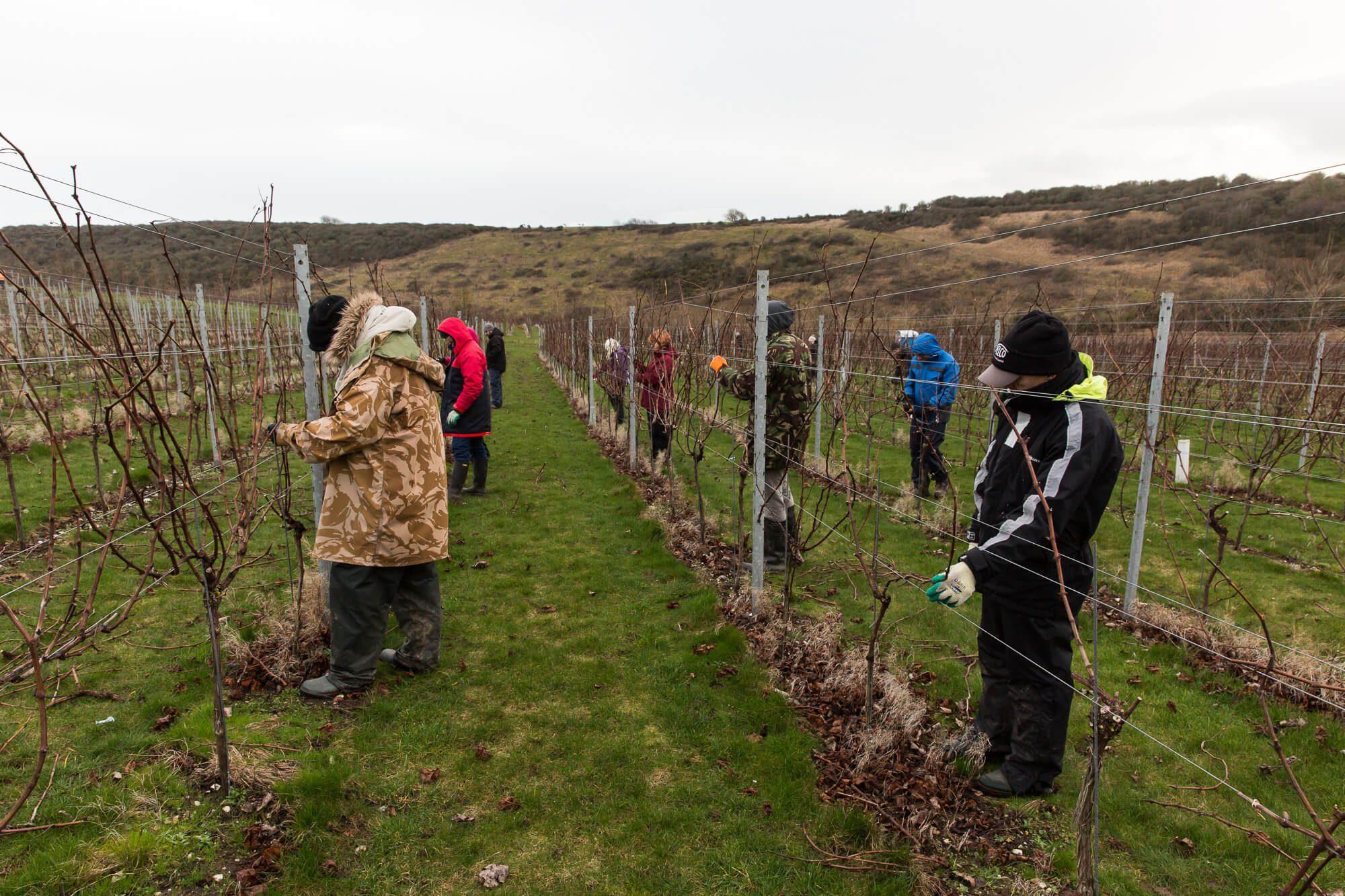 Pruning Team