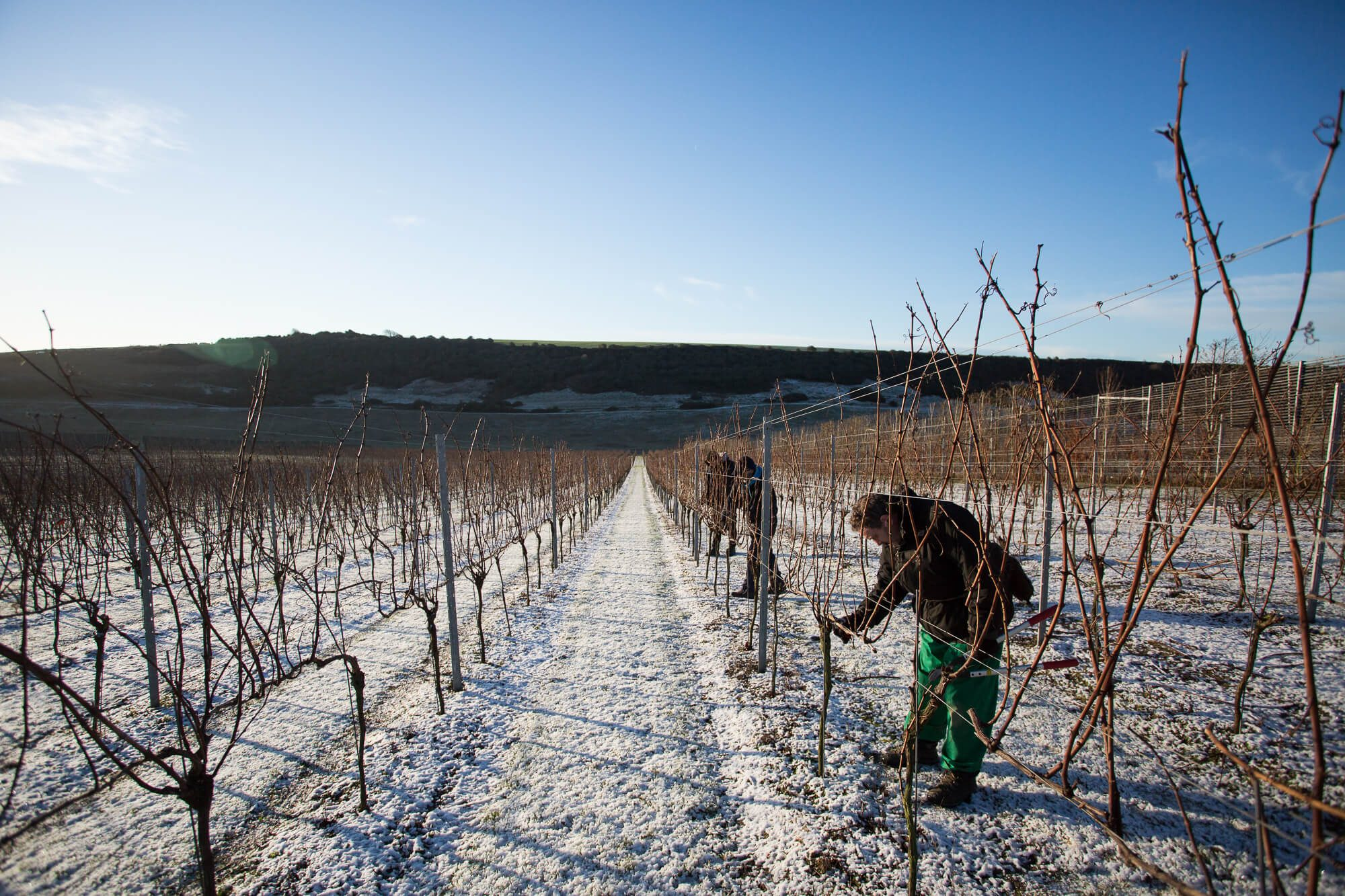 Pruning in the Snow
