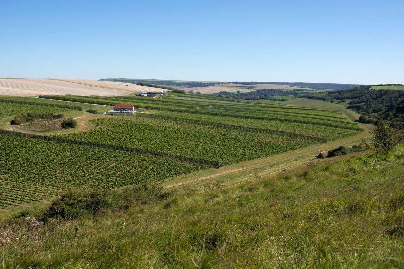 Rathfinny Wine Estate Sussex Vineyard
