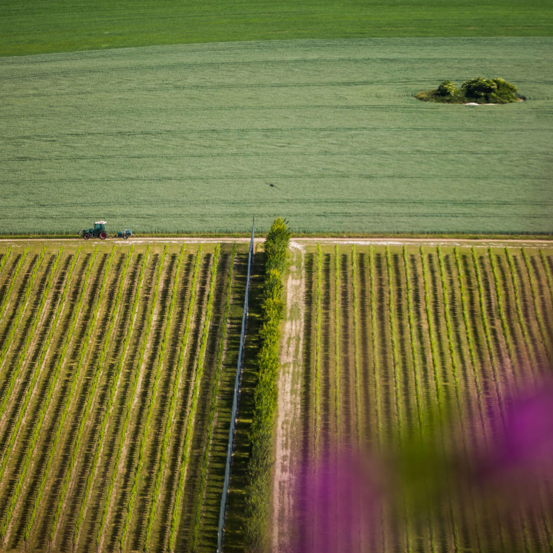 Sussex Vineyard
