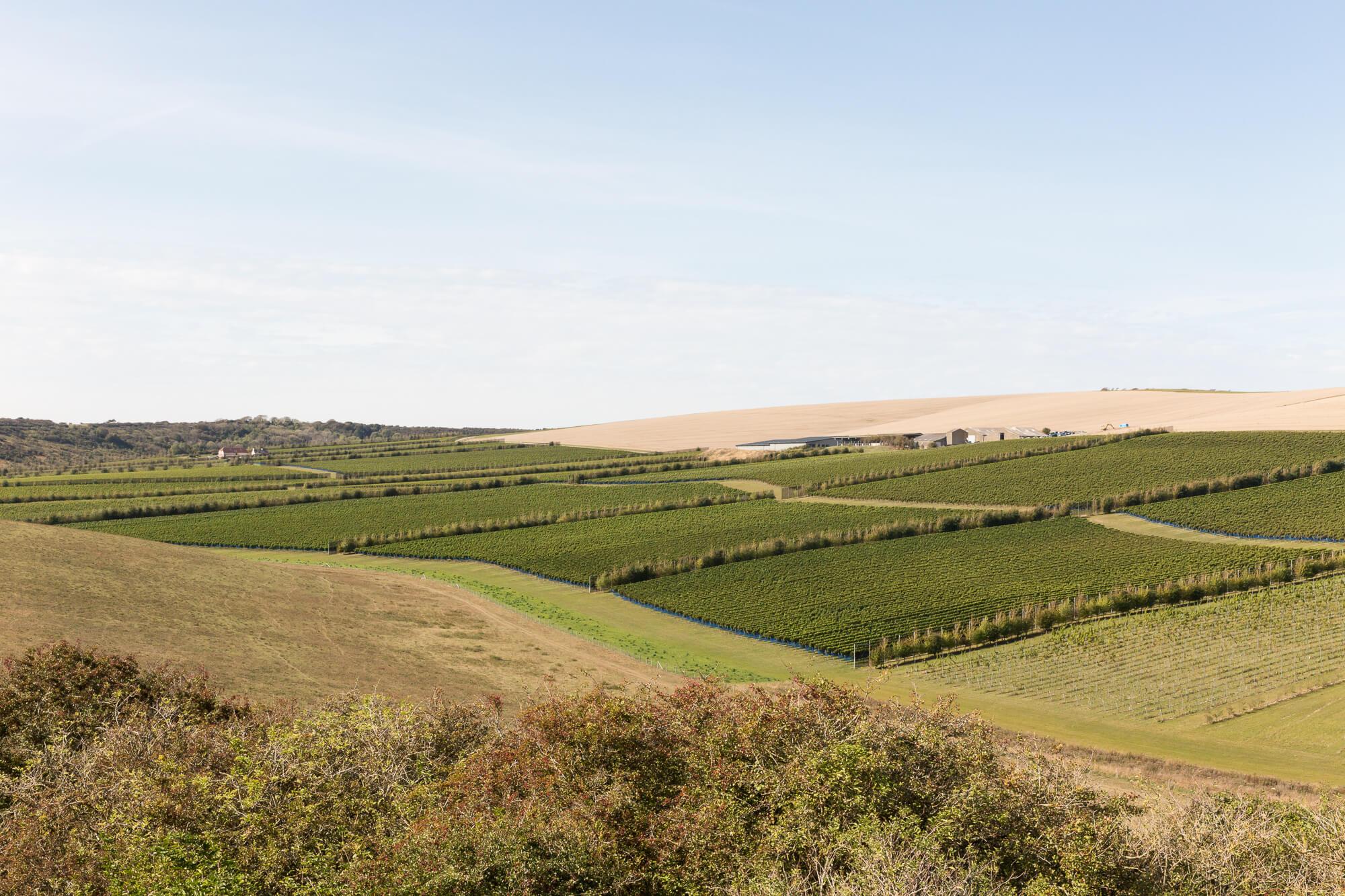 View of Rathfinny Blue Skies October 2020