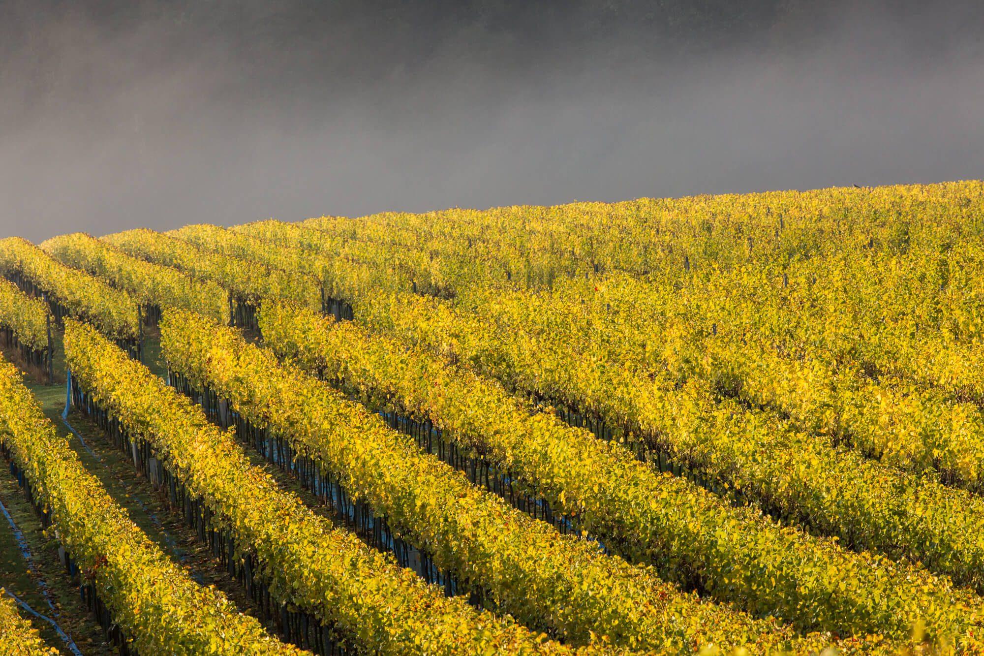 Vineyard Post Harvest
