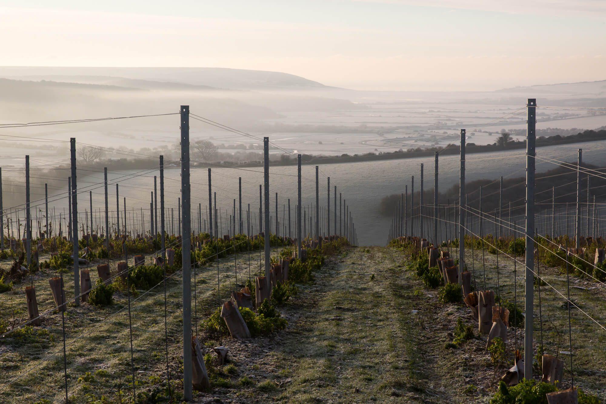 Winter Vineyard Views