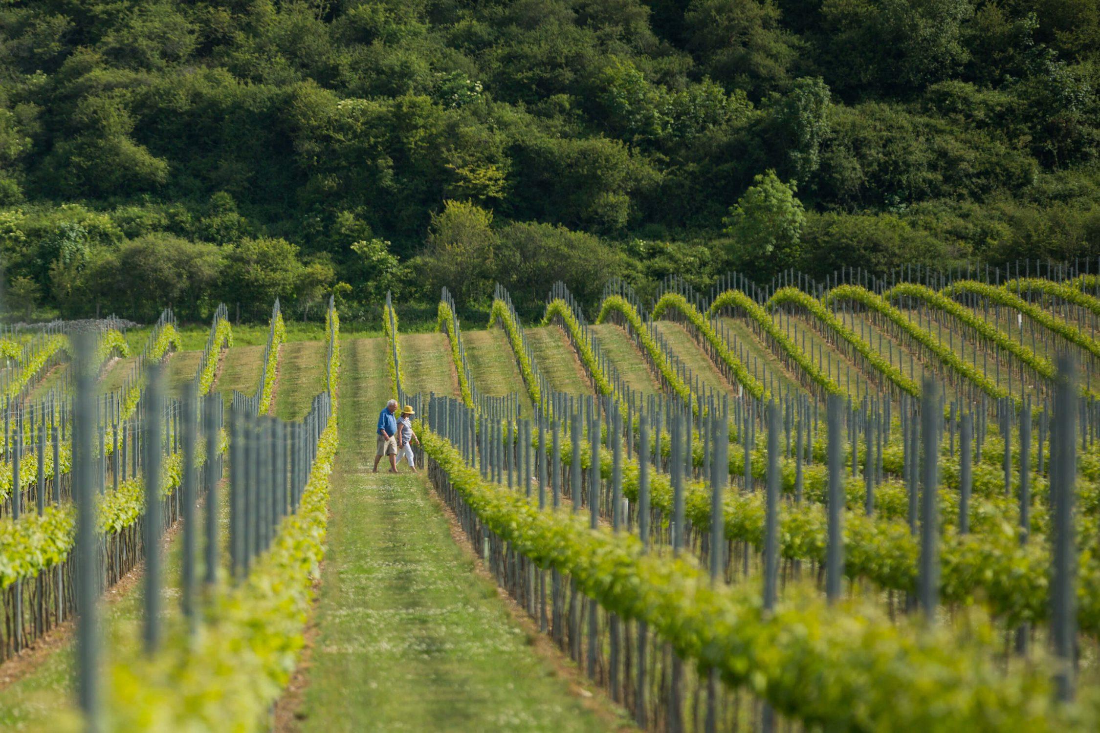 Couple walking through the Vineyard