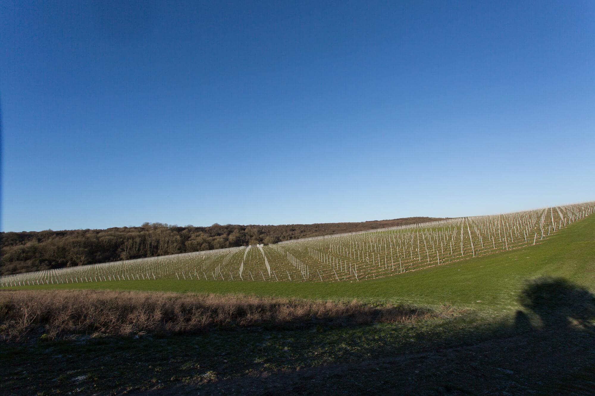 Blue Sky Over the Vineyard