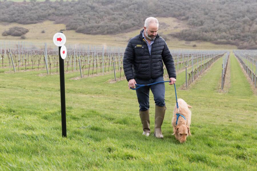 Dog Walking Sussex