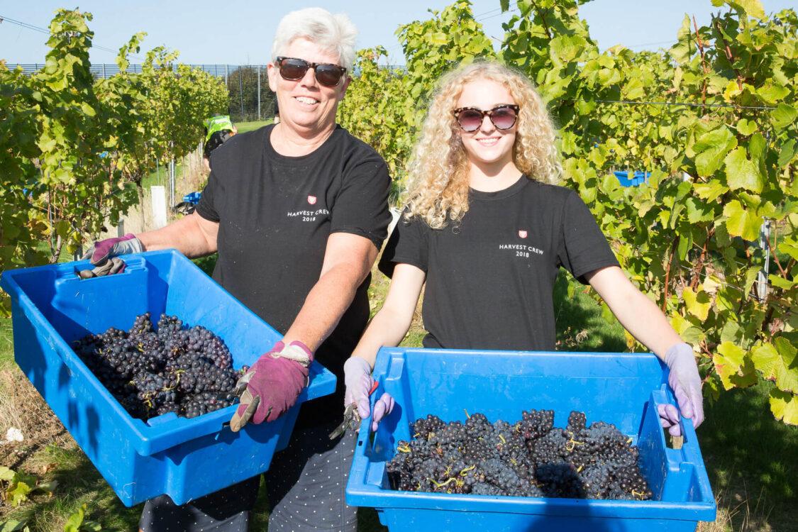 Female Vineyard Workers