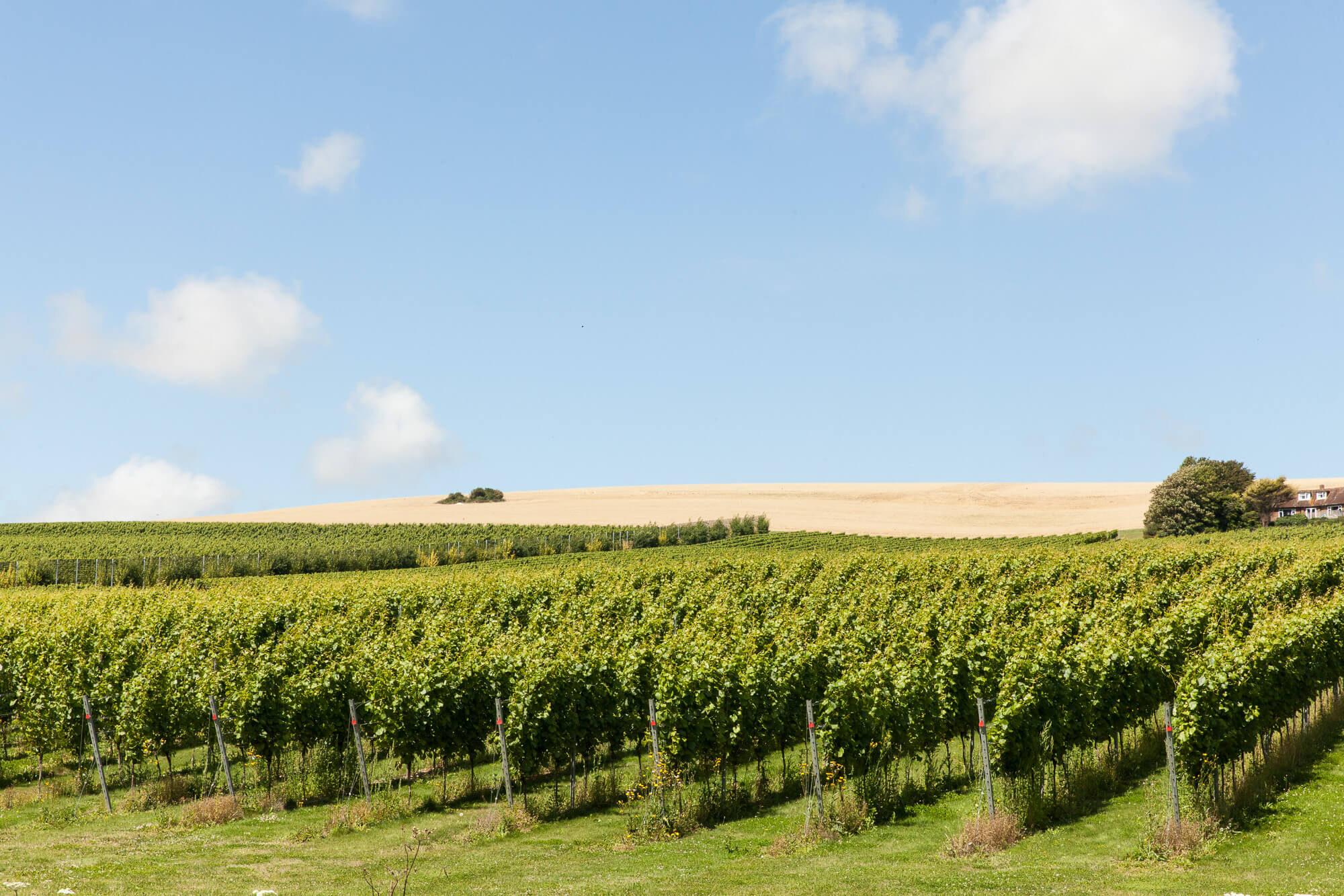 Summer on the Vineyard