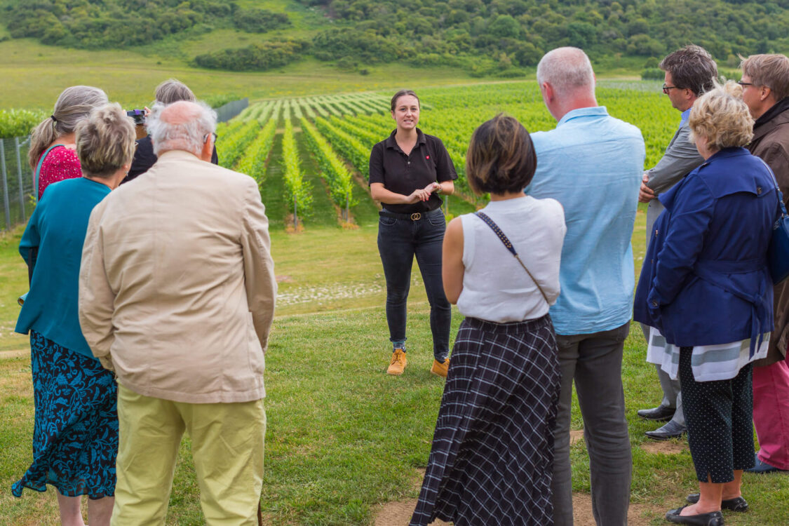 Rathfinny Vineyard Tour