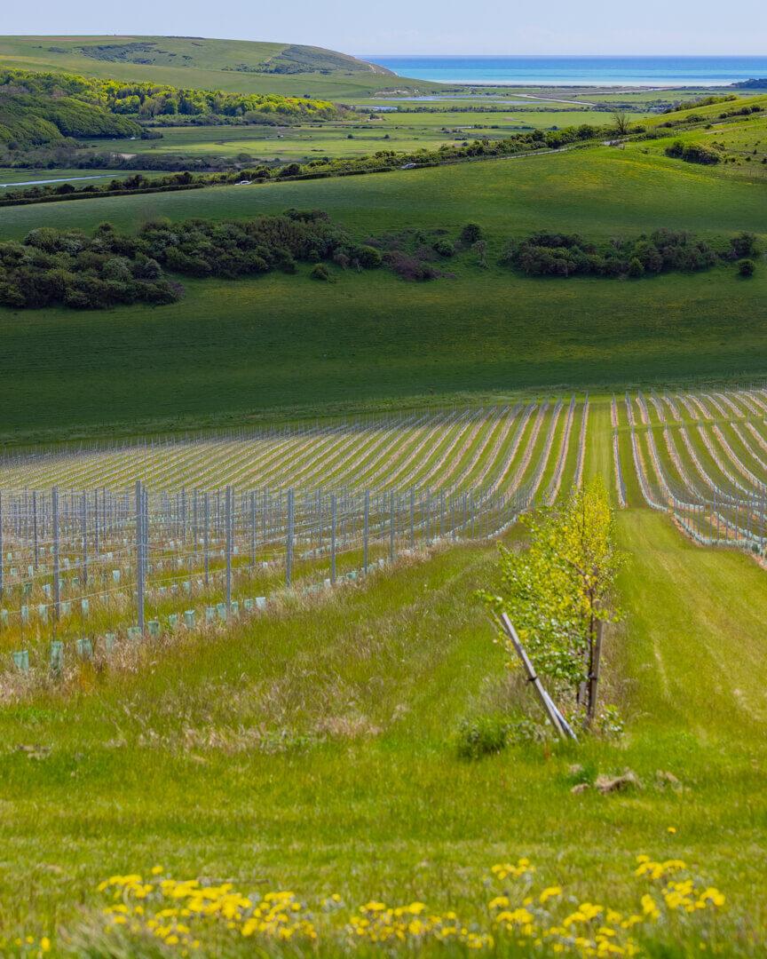 Rathfinny Sussex Vineyard
