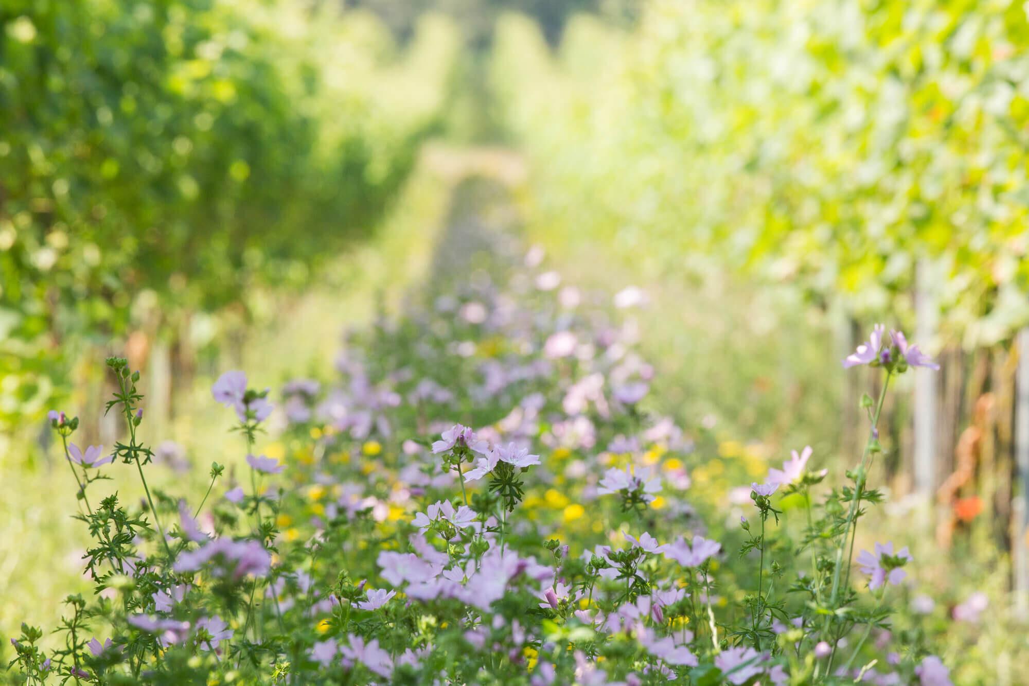 Inter-row flowers